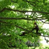 New England ISA Tree Climbing Championship [SIV355]