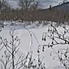 Snow Sleuths