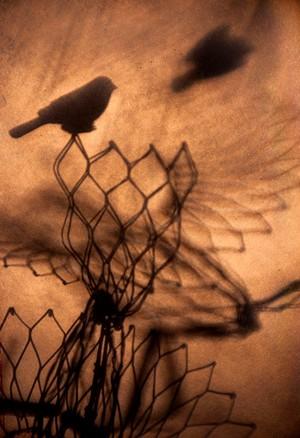 "COURTESY OF BIRDS OF VERMONT MUSEUM - ""Perilous Passage"" by Michelle Saffran"