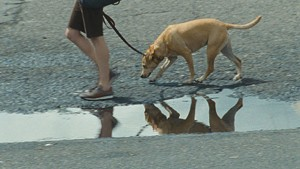 PET PROJECT Reichardt cast her own golden retriever in this minimalist saga  of desperation  and devotion.