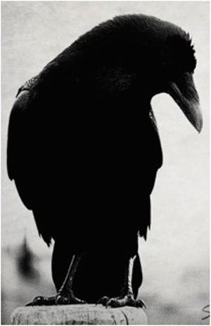 raven_png-magnum.jpg