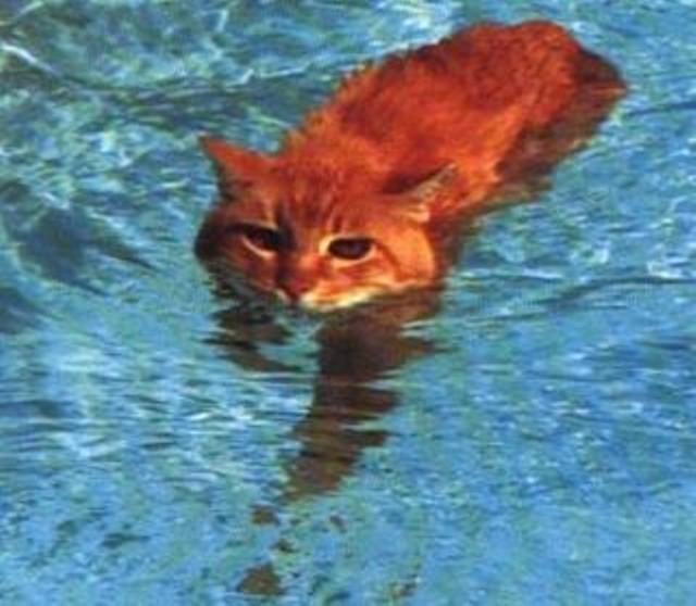 sea_kitten_.jpg