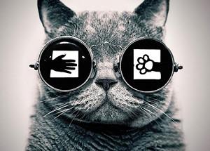 a561b6fe_cat_in_sunglasses.jpg