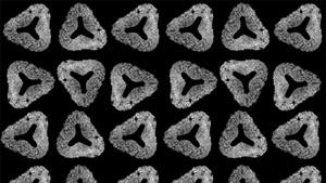 Pollen Tetrad pattern by Ariele Faber