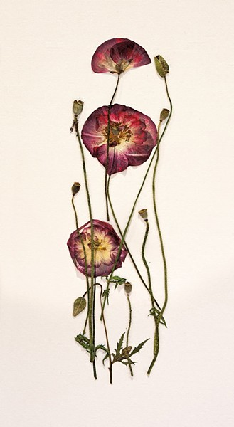 Poppies by Maggie Lake, 2014