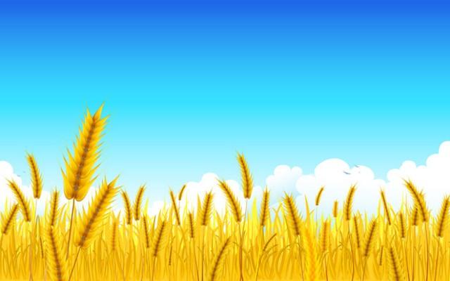 food-wheat_0.jpg