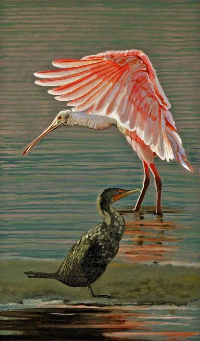 Roseate spoonbill and cormorant