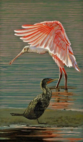 Roseate spoonbill and cormorant