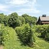 Best winery