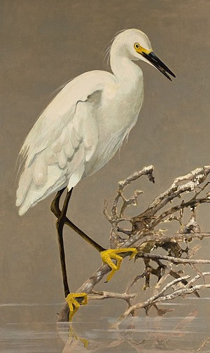 "COURTESY OF JUDITH VIVELL - ""Snowy Egret"""