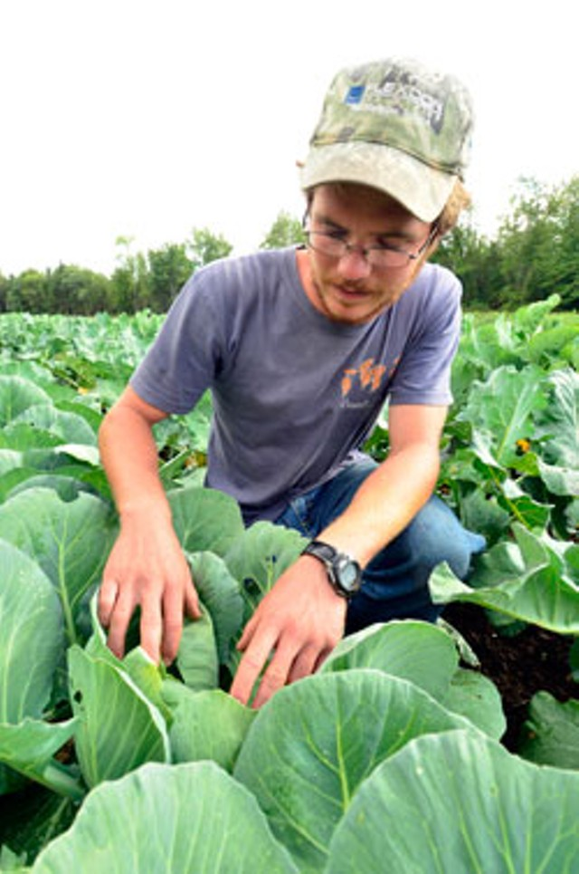 Sterling College student Niels Meyer in the cabbage patch - JEB WALLACE-BRODEUR