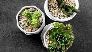 What Houseplant is Right for You?