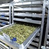 Cannatrol Applies Food Curing and Aging Science to Cannabis