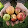 Shacksbury to Open Tasting Room in Vergennes