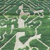This Year's Giant Corn Maze is Bear-able
