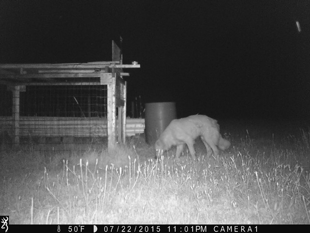 Murphy caught on camera at night - COURTESY OF WILSON RING
