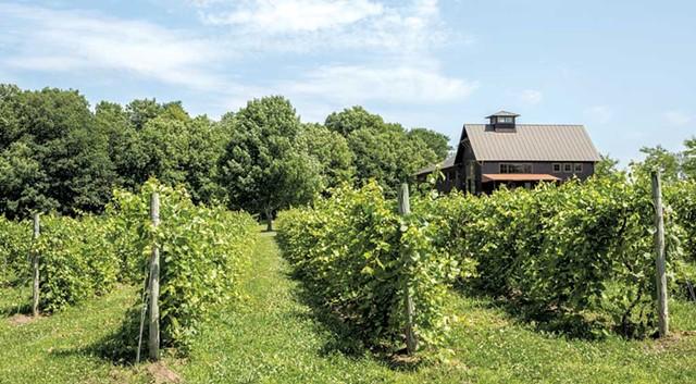 Shelburne Vineyard - OLIVER PARINI