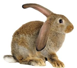 10-pets-bunny.jpg