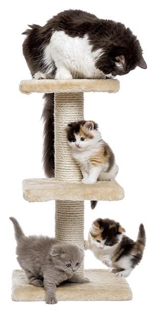10-pets-cattree.jpg