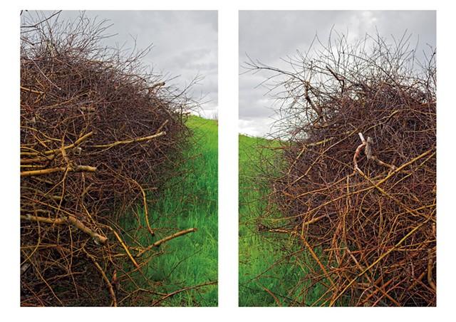 """Apple Pruning Brush Piles in Spring Rain, Putney, VT"" by Brent Seabrook"