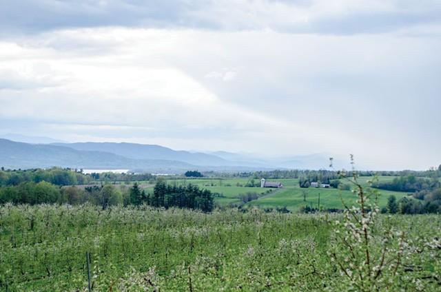 Champlain Orchards in Shoreham - COURTESY OF S.P. REID
