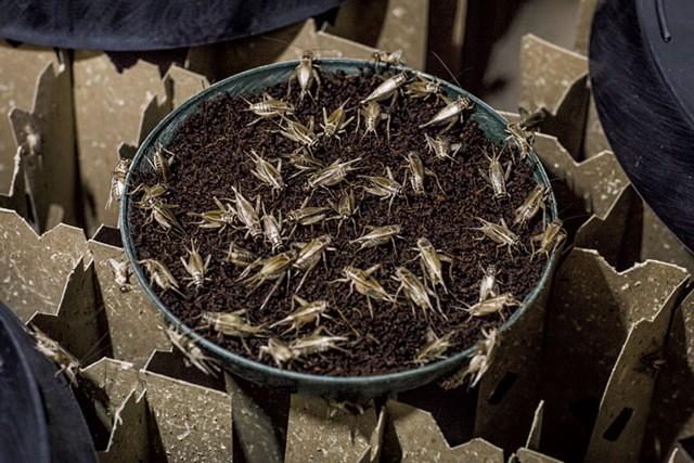 Crickets - LUKE AWTRY PHOTOGRAPHY