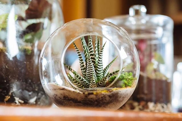 A terrarium created by Susan Goldstein - OLIVER PARINI