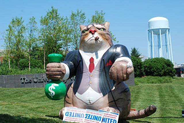 A fat cat mocking hospital management - SARA TABIN