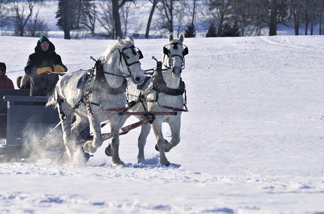 Pat Palmer and his draft horse team at Shelburne Farms - COURTESY OF JEAN CROSS