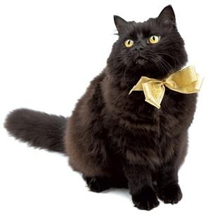 10-pets-cat.jpg
