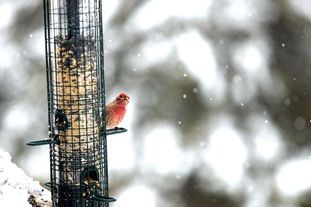 Winter birdfeeder - JAMES BUCK