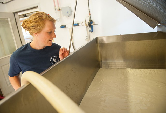 Clara Ayer pumping whole milk into the calf barn tank at Fairmont Farm - © CABOT CREAMERY CO-OPERATIVE