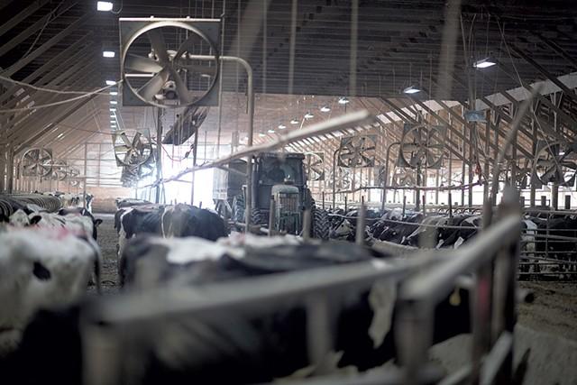 Jason Vorsteveld driving the feed wagon through the barn - CALEB KENNA