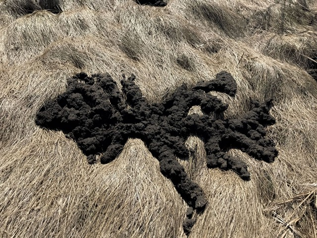 Mole tracks - COURTESY OF TIM GUITERMAN