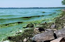 File: blue-green algae on Lake Champlain last year - KATHRYN FLAGG