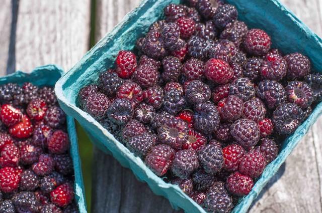 Black raspberries - HANNAH PALMER EGAN