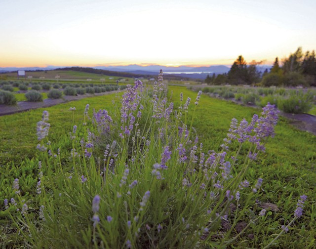View from Lavender Essentials of Vermont; - COURTESY OF LAVENDER ESSENTIALS OF VERMONT