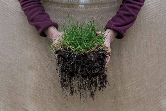 Visual soil assessment - LUKE AWTRY