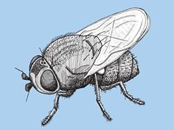 Silver fly - MATT MORRIS