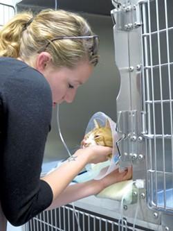 Jessica Haupt visiting her cat, Kitty - MATTHEW THORSEN