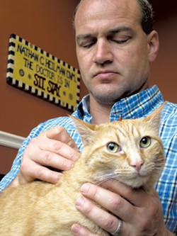 Doc the cat getting acupuncture - MATTHEW THORSEN