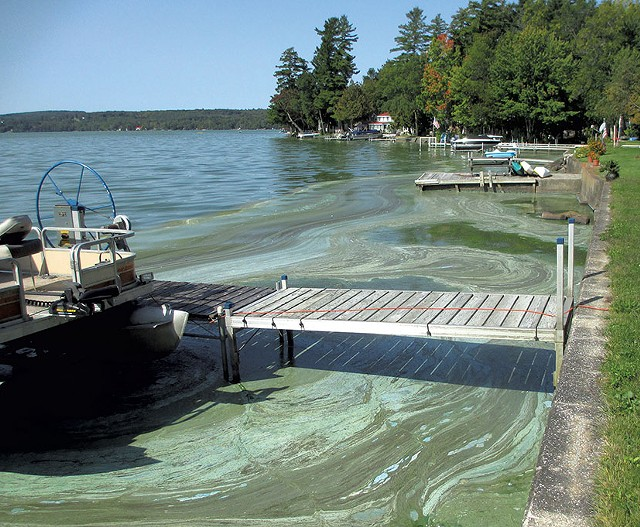 Blue-green algae on the shores of Lake Carmi in 2017 - FILE: COURTESY OF DICK BENTON