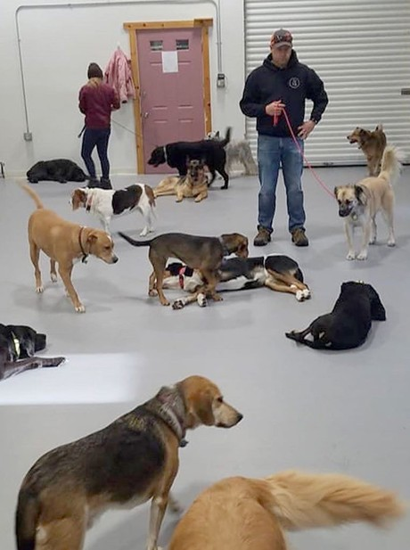 Vermont Dog Trainer - COURTESY OF VERMONT DOG TRAINER