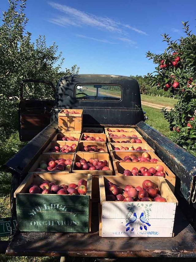 Shelburne Orchards - COURTESY OF SHELBURNE ORCHARDS