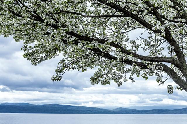 Lake Champlain - LUKE AWTRY