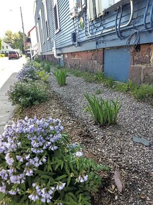 Rachelle Gould's rain garden - COURTESY OF RACHELLE GOULD