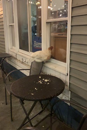 """""""Henrietta"""" making herself at home on the patio of St. Paul Street Gastrogrub - KATIE HODGES"""