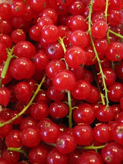 red_currants_3.jpg