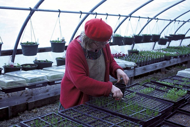 Heidi Racht tending seedlings at Pleasant Mount Farm - COURTESY OF PLEASANT MOUNT FARM