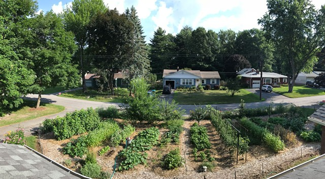 Ethan Joseph and Jessica DeBiasio's front-yard garden in bloom - COURTESY OF ETHAN JOSEPH